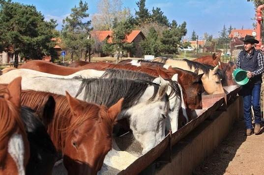 The Cowboy Farm